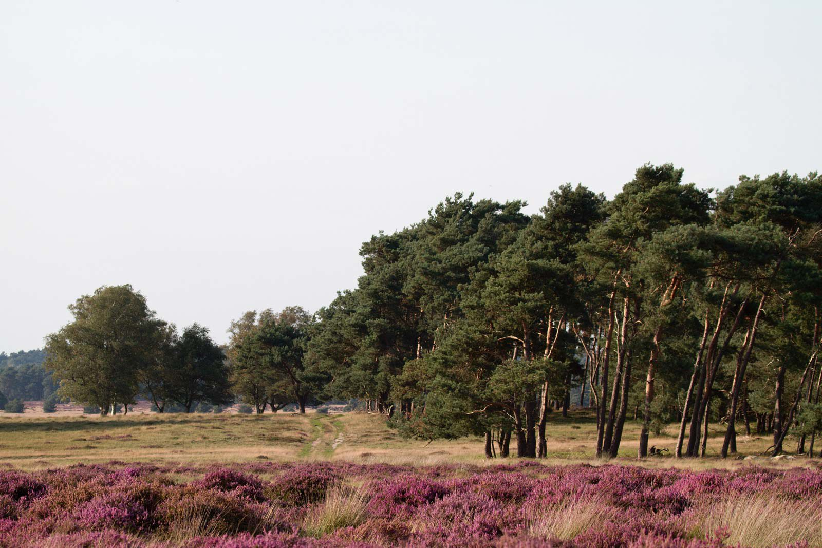 The Veluwe